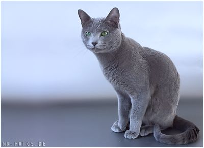 Russisch Blau