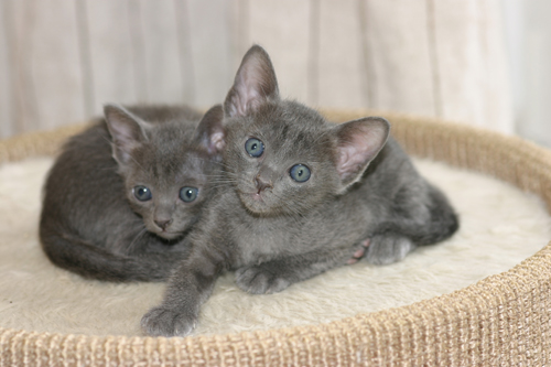 Falls Sie jetzt neugierig darauf sind, mehr von Koratkatzen of San-Chai zu erfahren, sind Sie eingeladen, sich die nächsten Seiten anzuschauen.