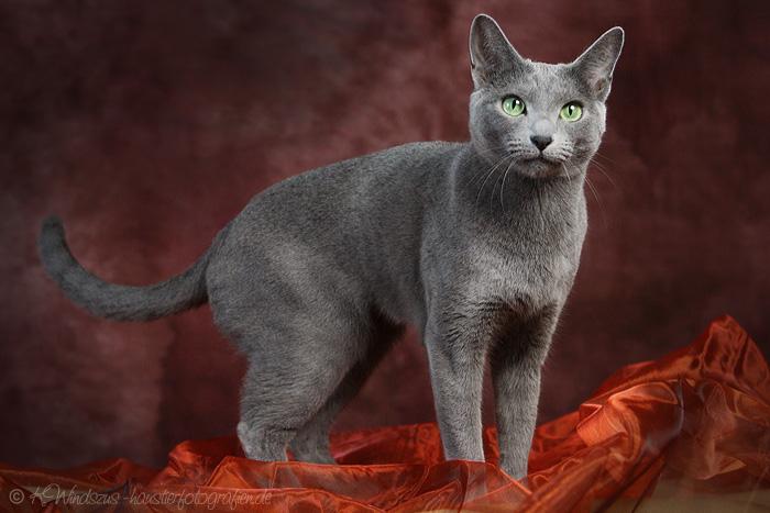 Sie ist eine sehr intelligente, neugierige, anhängliche und ruhige Katze mit einer sanften und zarten Stimme. Sie sucht die Nähe ihres Besitzers